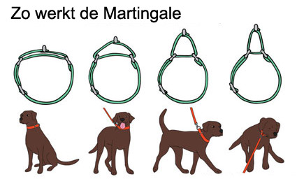 correctie halsband/martingale halsband